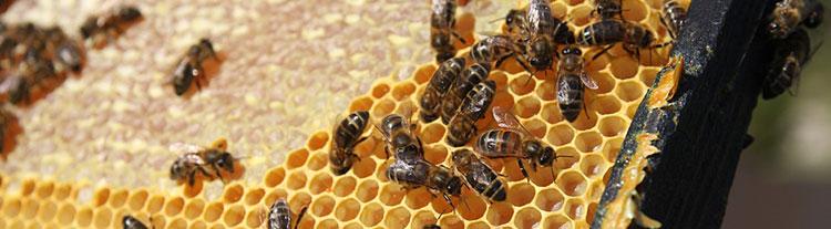 Payez moins cher vos achats sur le web avec Honey